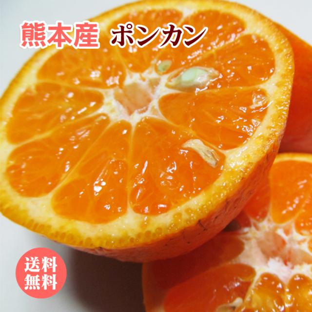 【 送料無料 】熊本産 ポンカン 5kg 【 ぽんかん みかん ギフト 柑橘 完熟 九州 熊本 】