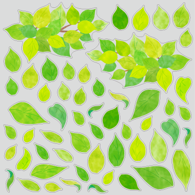 【VP】新緑のグリーンリーフの写真