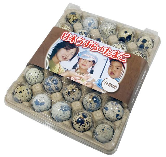 【豊橋名産】 生命のたまご うずらの卵 (有精卵) 30個入り
