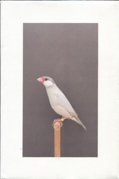 Luke Stephenson: An Incomplete Dictionary of Show Birds