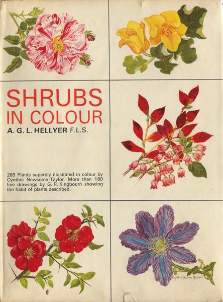 SHRUBS IN COLOUR