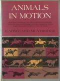 Eadweard Muybridge: Animals in Motion