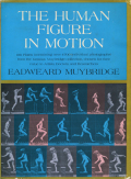 the human figure in motion2