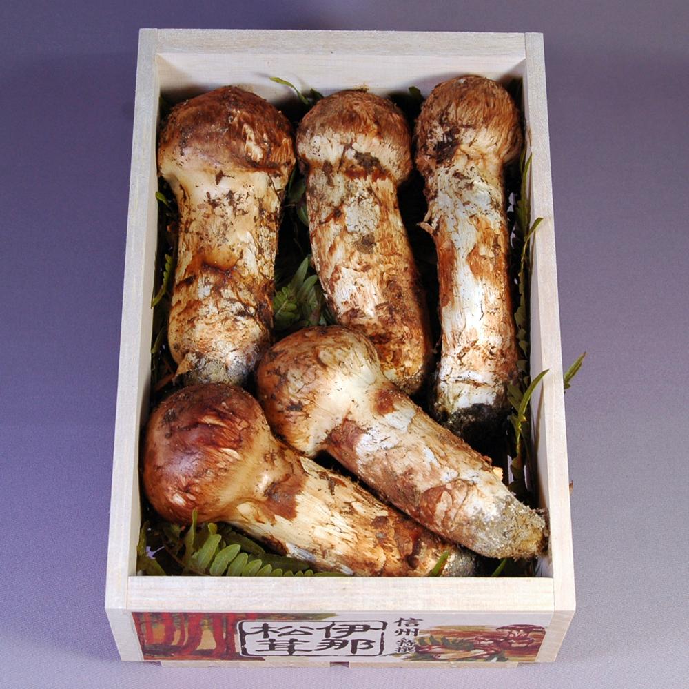【国産 信州高遠松茸】最上級品 つぼみ