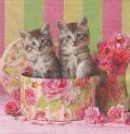 5枚組ペーパーナプキン*Cats in Box
