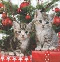 5枚組ペーパーナプキン*Christmas Kitten