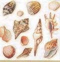 5枚組ペーパーナプキン*貝殻
