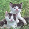 5枚組ペーパーナプキン*Susi & Sammy