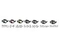 APOLLO(アポロ) バイオメタルマスク type-D ブラックフランジ