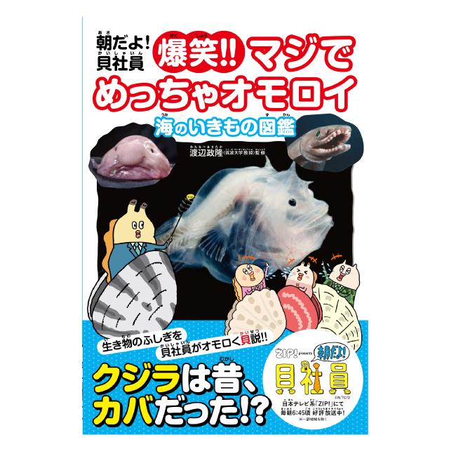 朝だよ!貝社員 爆笑!!マジでめっちゃオモロイ 海のいきもの図鑑