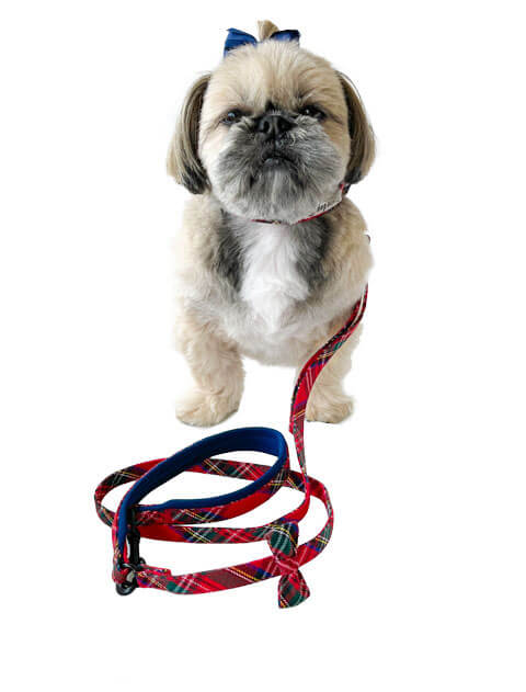 【DOG GOODS】タータンチェック リード&カラーセット