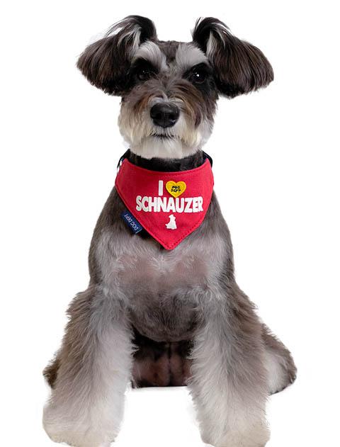 【DOG GOODS】MY DOG バンダナ 数量限定レッド