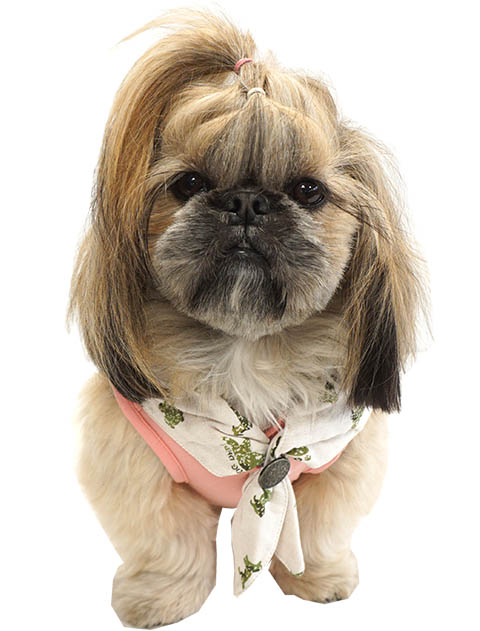 【DOG WEAR】DOGスタンプバンダナレイヤー