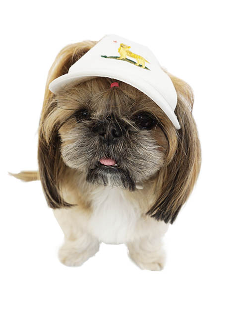 《期間限定アウトレット》【DOG GOODS】カリフォルニアドッグキャップ