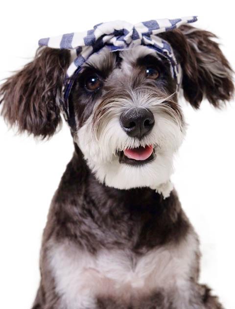 【DOG GOODS】リボン キャップ