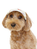 【DOG GOODS】パステルマルチボーダー ドッグサンバイザー