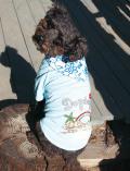 【期間限定アウトレット】【DOG WEAR】アロハバンダナTシャツ