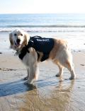 【DOG GOODS】大型犬用 3wayハーネス