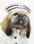 【DOG GOODS】マリンキャップ