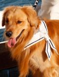 【DOG GOODS】マリンバンダナ