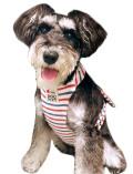 【DOG GOODS】マリンボーダー クールエプロン
