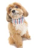 【DOG GOODS】マリンボーダー クールバンダナ