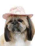 【まとめ割引対象】【DOG GOODS】タイダイ風ハット
