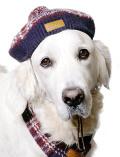 《まとめ割引対象》【DOG GOODS】ドッグレトロチェックベレー