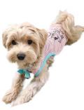 【DOG WEAR】リボン付きノースリーブメッシュ