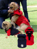 【DOG WEAR】マウンテンパーカーマント型