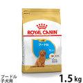 (お取り寄せ)ロイヤルカナン プードル子犬用 1.5kg