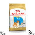 (お取り寄せ)ロイヤルカナン 柴犬子犬用 3kg【メーカーの出荷状況により画像と異なるパッケージでお届けする場合がございます。】