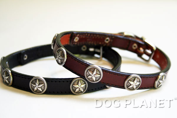 犬の首輪 小型犬 WoofWear 【テキサススター サイズ10 幅1.2cm】