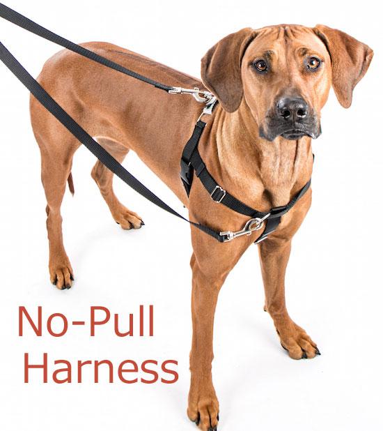 犬のハーネス【引っ張り防止ノンプルハーネス&専用リードセット】サイズ:L《大型犬》