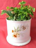 <英国ビンテージ>英国のカトレアのお花たち♪カンシェイプが美しい大きな鉢カバー