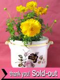<Crown Devon>黒とグレーピンクのバラ♪キラキラと金色に輝くシックな鉢カバー
