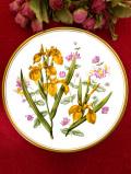 <Spode>「GARDEN FLOWERS」♪黄色のアイリスとハニーサックルがきれいな大きな絵皿「プレートハンガー付き」
