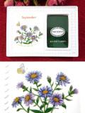 <ポートメリオン>「botanic garden」♪紫のアスターのボタニカルアートのフォトフレーム