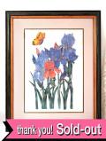 <英国ボタニカルアート>アイリスのお花と蝶々♪縦57.5cm横47cm素晴らしく大きな版画の額