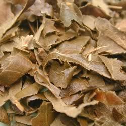 橘光園のびわの葉茶