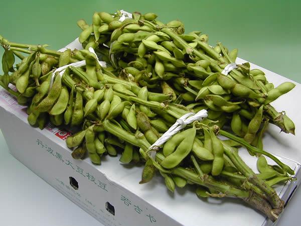 丹波黒豆枝豆若さや2kg
