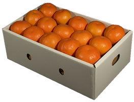 栗山園の春柑橘