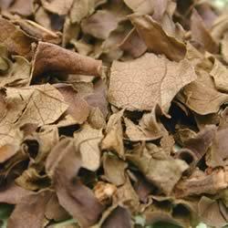 橘光園の柿の葉茶