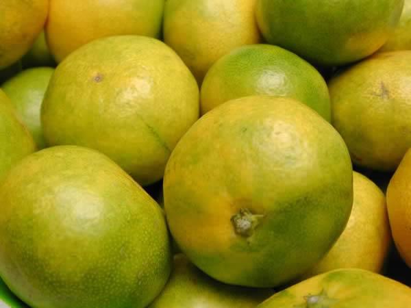 黄緑みかん