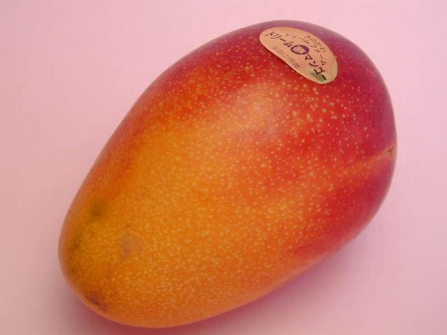 大嶺農園のマンゴー