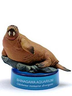 海洋堂 日本水族館立体生物図録 アクア・トトぎふVer. セイウチ