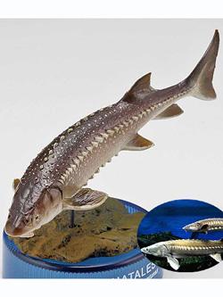 海洋堂 日本水族館立体生物図録 第2巻 アクア・トトぎふVer. シロチョウザメ