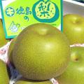 【徳島産】豊水(ほうすい)梨 秀 5kg(10〜14個)【新鮮なっ!!徳島】