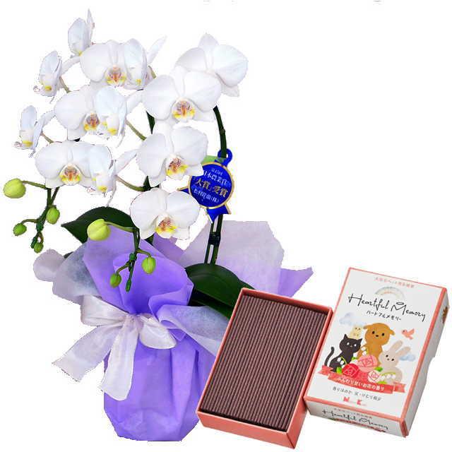 ミディ胡蝶蘭 2本立 ミディ 白色 お供え ペット 日本香堂 ハートフルメモリー お花の香り