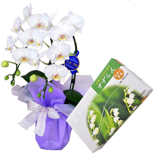 ミディ胡蝶蘭 白色 2本立ち 薫寿堂のお線香 花かおりすずらん 微煙タイプ #632 セット